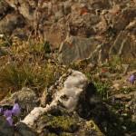 Quarz und Bergpflanzen
